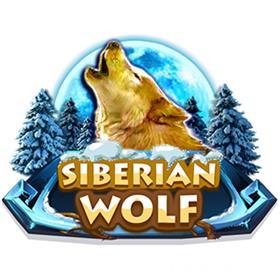 Siberian wolf slots casino