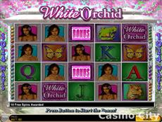 White Orchid Casino Game