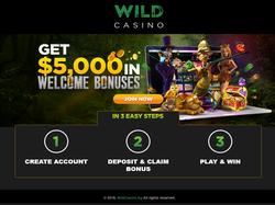 Play WildCasino Now